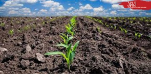 """Bachelor's Programme """"Agronomy"""" gained full 7-year accreditation"""